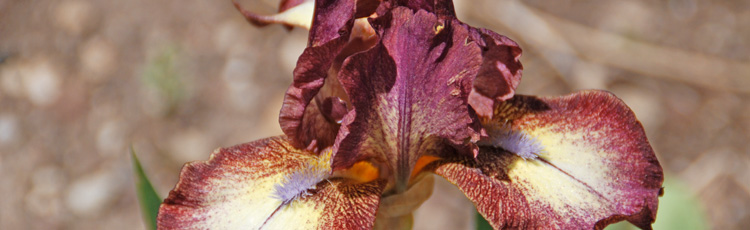 Iris-Have-Changed-Color.jpg