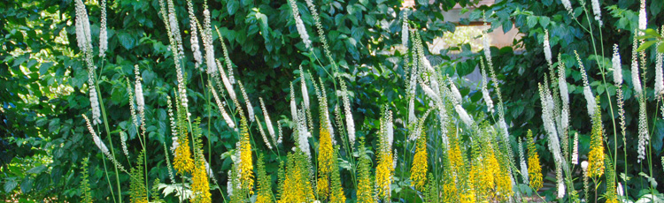 2012_365_MGM_Include_Some_Tall_Plants_in_the_Garden.jpg