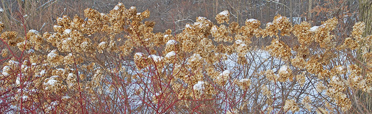 012020_Trees_and_Shrubs_with_Winter_Character-THUMB.jpg