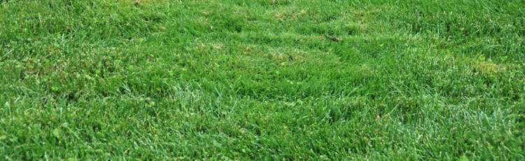 Little-Patches-of-Taller-Grass-in-the-Lawn.jpg