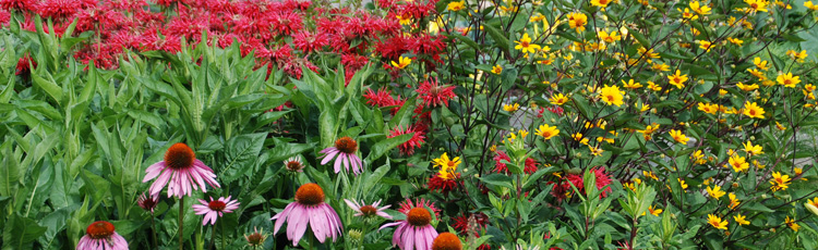 022616_Strategies_for_a_Low_Maintenance_Perennial_Garden.jpg