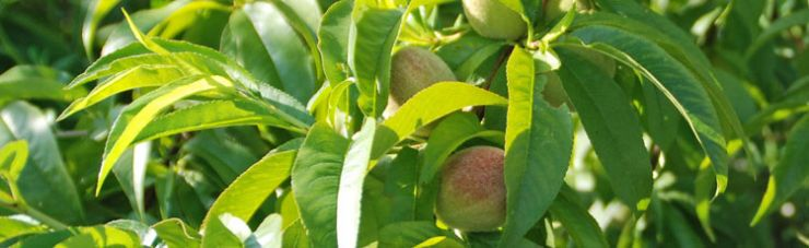 Problems Pests Amp Weeds Melinda Myers